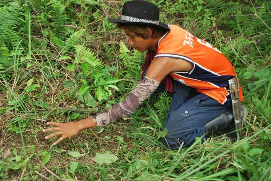 Caring for young planted seedlings