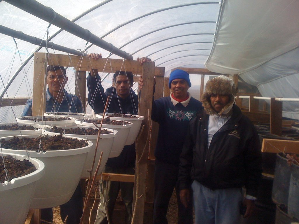 Bhutanese Farmers in our Hoophouse