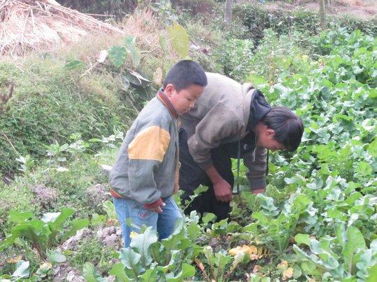 Picking vegetables for dinner