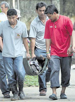 Dusit Zoo evacuates endangered animals