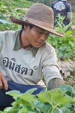 The local strawberry farmer