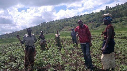 Women working in potatoes farm
