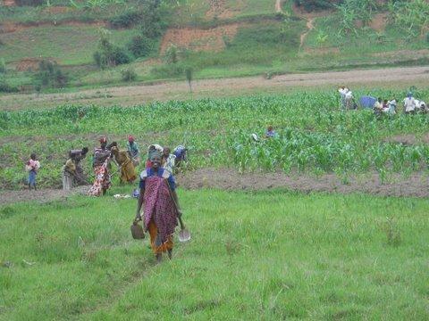 Enable 50 Rwandan Mothers to Farm for Profit