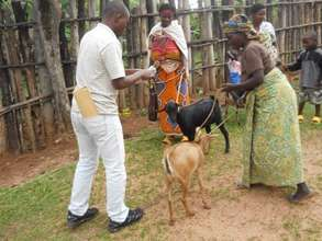 Goat giving ceremony