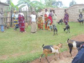 After the goat giving ceremony