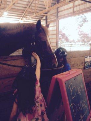 Giving horses love
