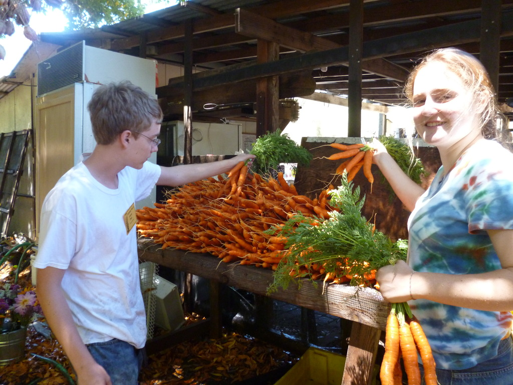 Rinsing Carrots for Shareboxes