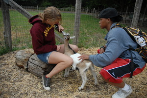 Campers Caring for the Animals