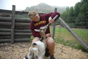 Daily Chores: bottle feeding baby goats