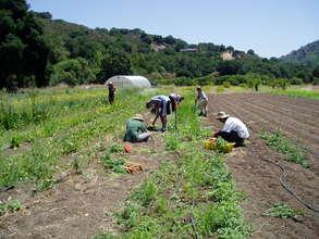 Farm Academy Harvesting Carrots