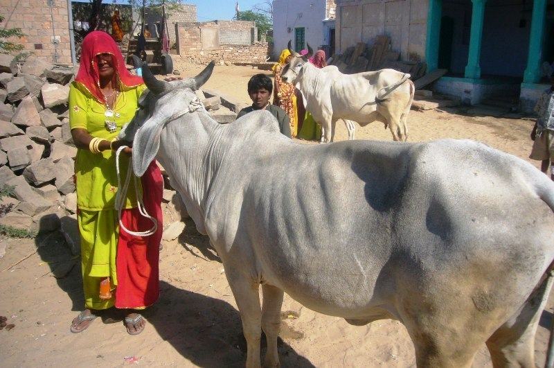 Participant of Microcredit Program with new cow
