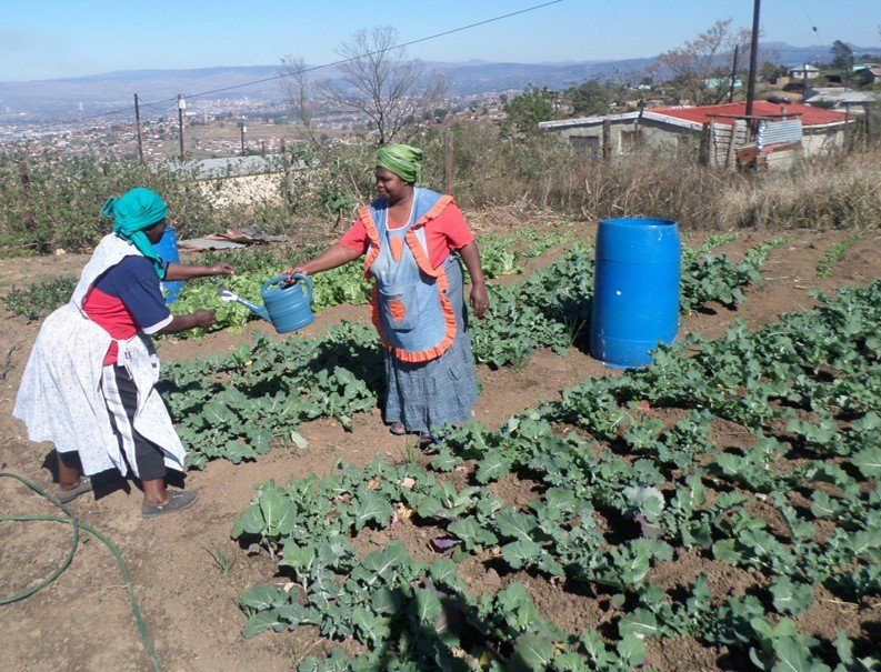 Mam Msomi* & Mam Khanyile* in their veggie garden