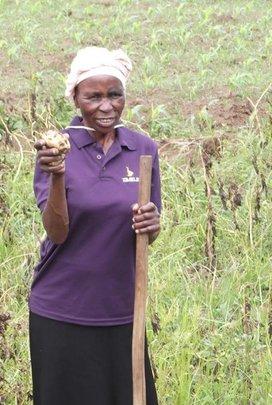 Masikhule member harvesting her potatoes for sale