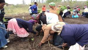 SHG members receive training on planting seedlings