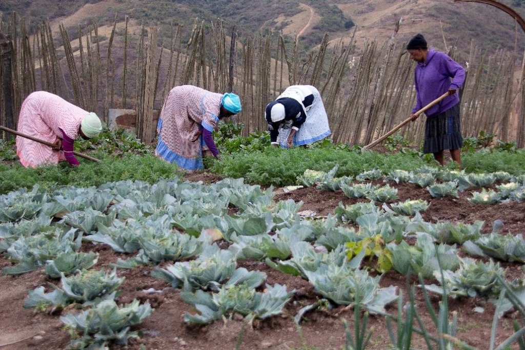 An SHG grows & sells veggies for income-generation