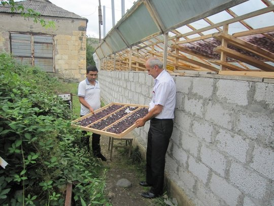 Dried fruit producers in rural Armenia
