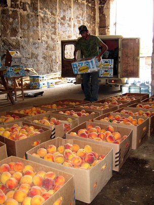 Peaches grown by local farmers to be dried & sold