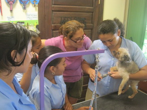 Learning about dog grooming business