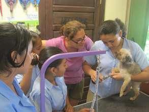 Dog Grooming Internship