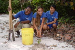 Planting Mahogany Tree