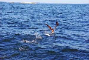 Gannet returns to the open ocean!