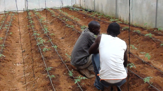 Green House Replanting
