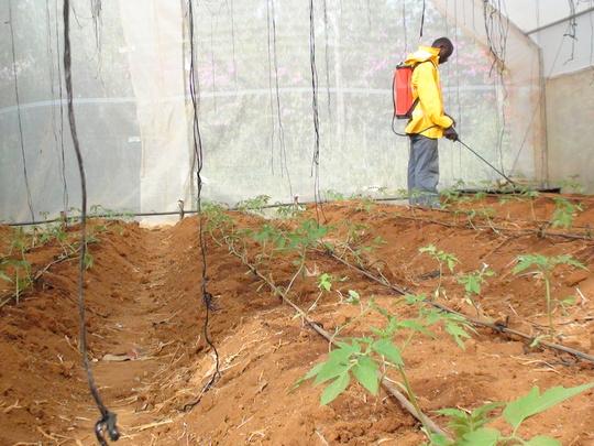 Spraying of Green House