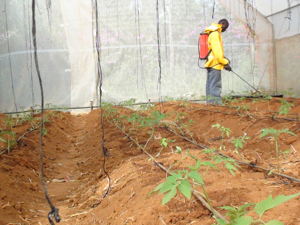 Spraying of Green House