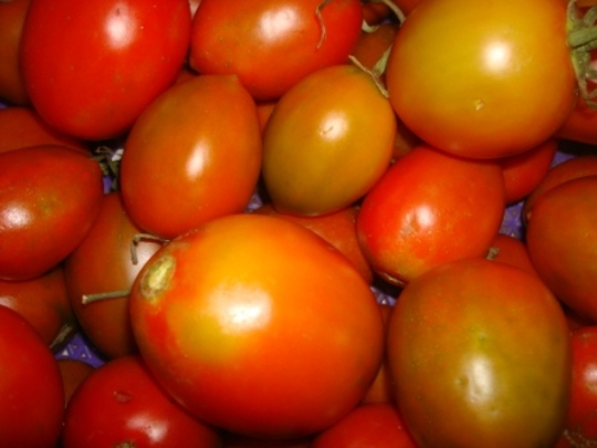 Juicy Toms Despite the Scorching Effect
