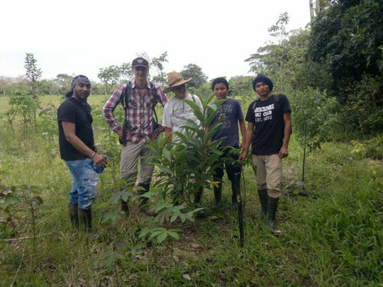 Progress of trees planted June 2011, Rio Sol