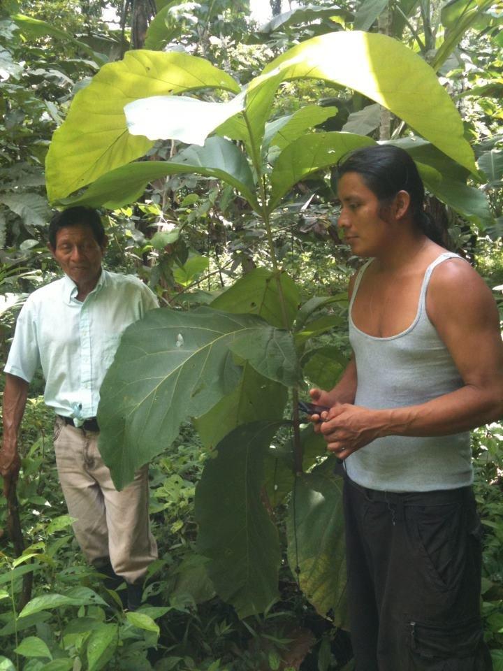 Bienvenido Cruz Castro under a tree planted 2012