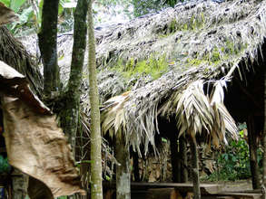 A traditional Maleku palm roof made of suite