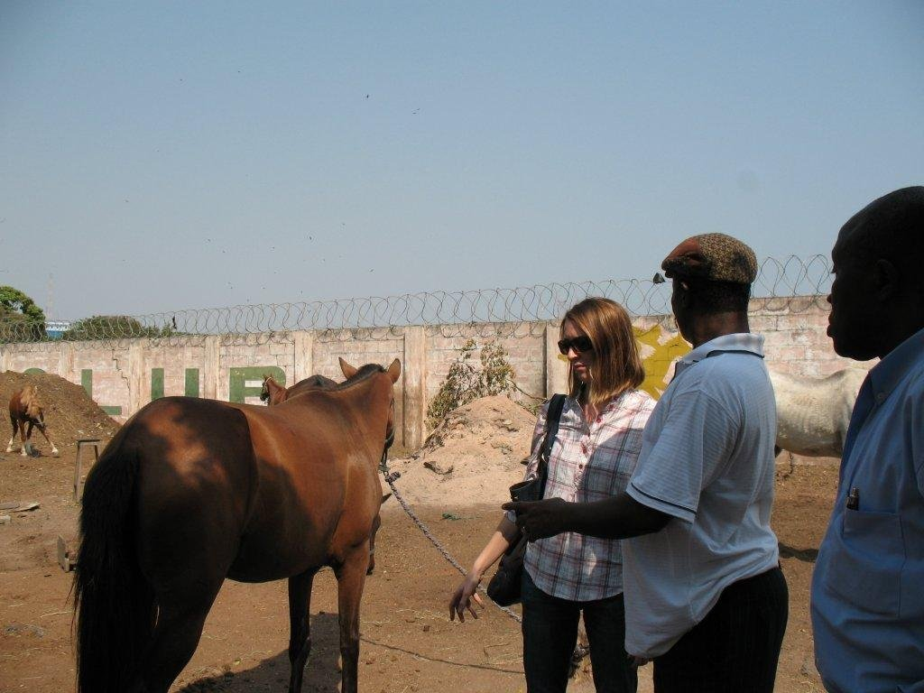 Improve care of Ghana's abandoned & abused horses