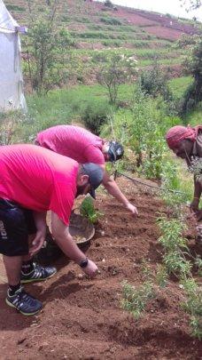 Volunteering in the Farm