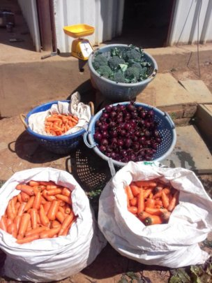 Vegetables radiating health from the ET  Farm
