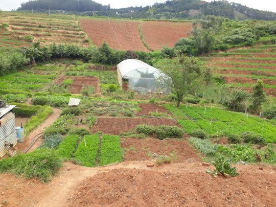ET's Biodynamic Farm