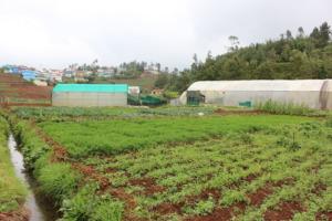 Megaraj ayya's farm overlooking his home-town
