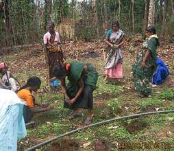 Herbal Resource Nursery for Forest regeneration