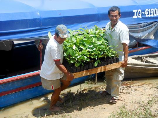 Bringing rosewood trees to Brillo Nuevo