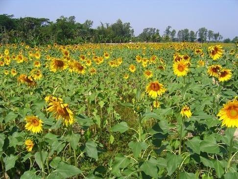 Development Through Agriculture