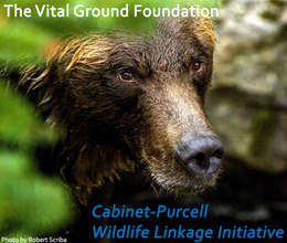 Cabinet-Purcell Wildlife Linkage Initiative