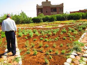 Mohamed walking through the Dar Taliba garden.