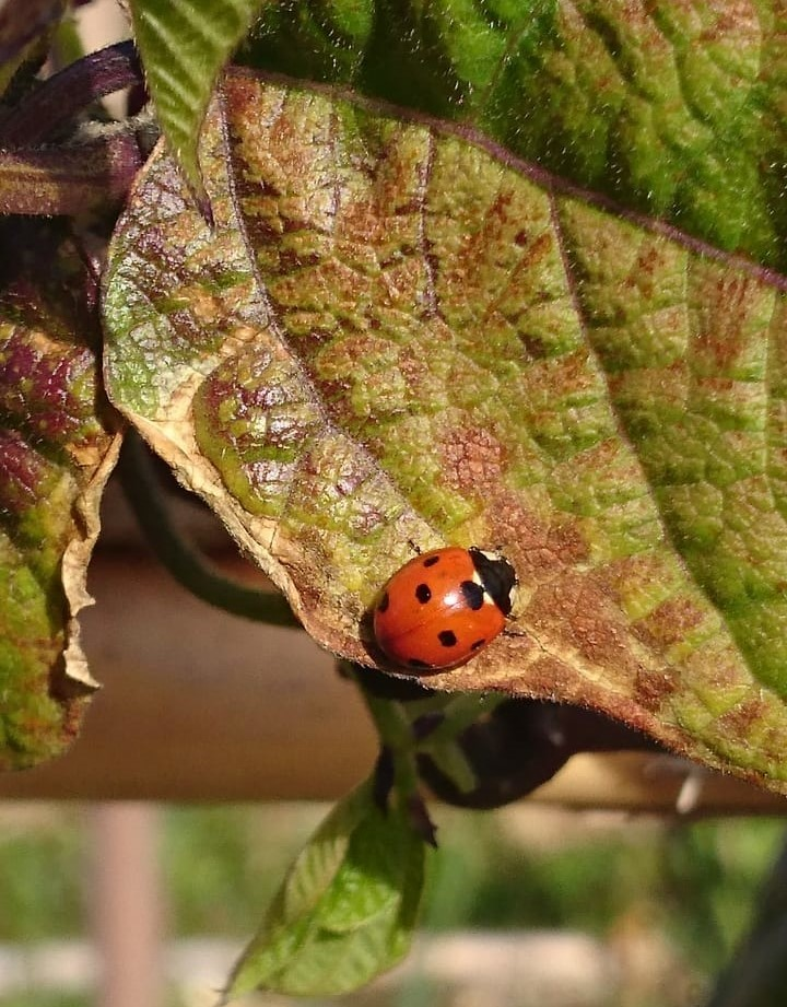 We spotted some ladybirds!