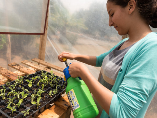 Gently watering seedlings in the new greenhouse