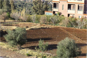 The vegetable patch at Dar Taliba awaits planting