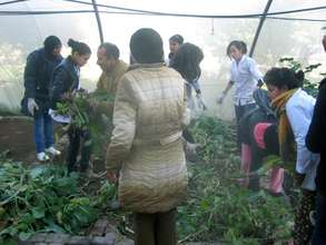 Students weeding and cleaning the greenhouse