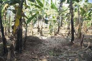 Land Before Home Garden Installation