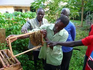 Beekeeping Project for the rural young women