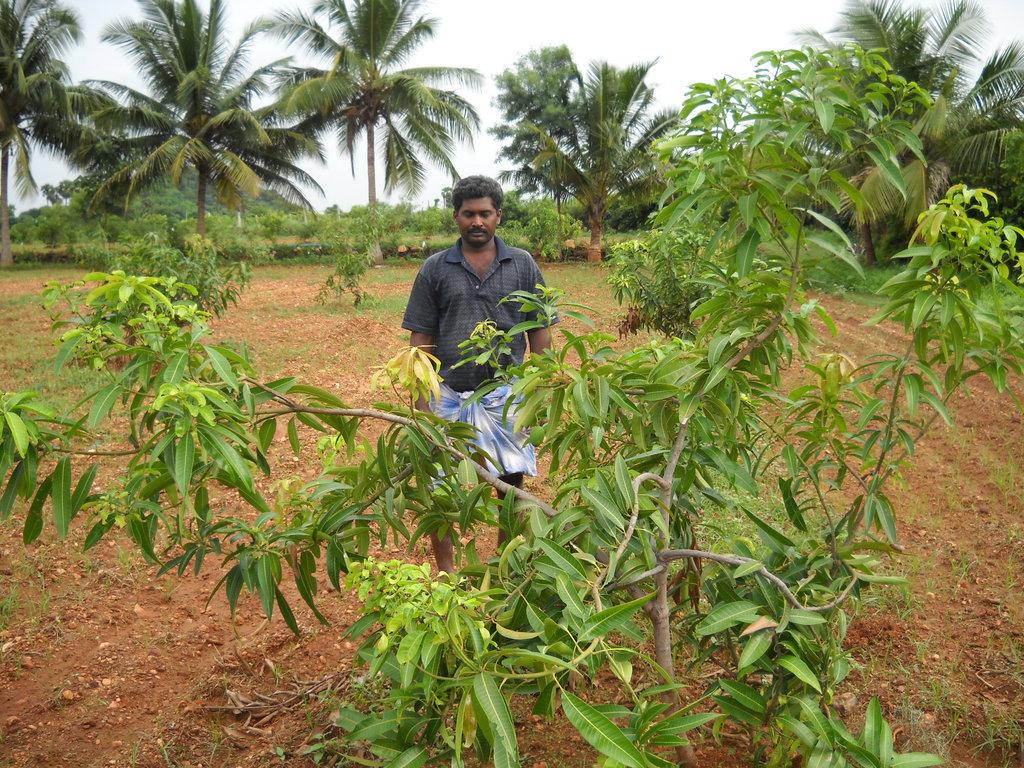 agroforestry awareness