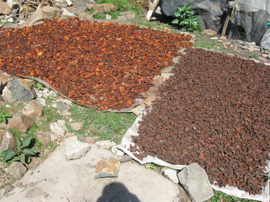 Henna spread out to dry